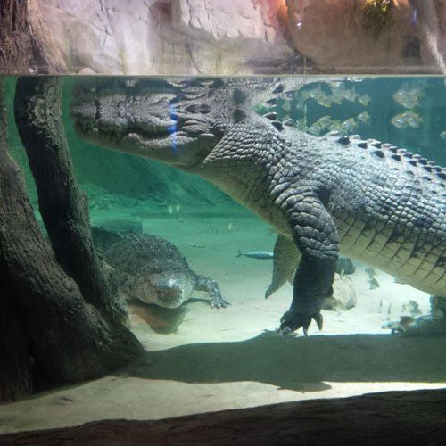 Crocs-in-New-Home-in-Dubai-